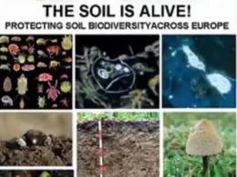 The soil is alive