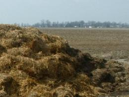 Manure stockpiled in a field for spreading.